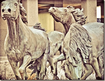 horses (1 of 13)