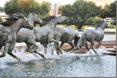 horses (2 of 13)