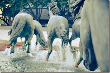 horses (4 of 13)